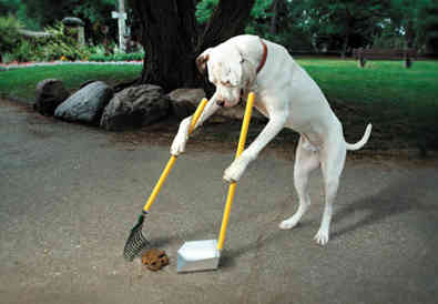 doggie-pooper-scooper1