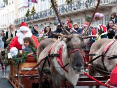 reindeer windsor